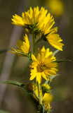 Fall Wildflowers by Pistos, photography->flowers gallery