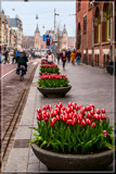 Amsterdam Tulip Festival 12 by corngrowth, photography->city gallery