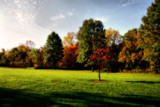 Wishing it was Didlika Park by casechaser, photography->landscape gallery