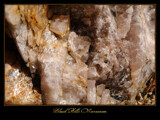 Black Hills Microcosm by Nikoneer, photography->macro gallery