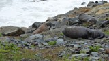 Sensible Seals by LynEve, photography->animals gallery
