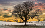 The gate and tree 2 by slybri, Photography->Manipulation gallery
