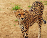 Sleek Lines And A Cool Look by braces, Photography->Animals gallery