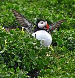 The cherubim by biffobear, Photography->Birds gallery