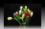 Tulip Arrangement by ccmerino, Photography->Flowers gallery