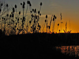 Just a Teasel Sunset by jsnaher, photography->sunset/rise gallery