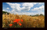 Summer I by kodo34, Photography->Landscape gallery