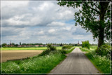 Cow-Parsley 'Guidance' by corngrowth, photography->landscape gallery