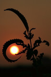 Framing the Sun by Silvanus, photography->nature gallery