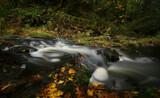 Creek curls & Casper by Salishutter, photography->water gallery