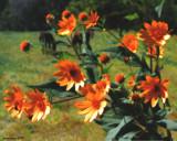 Wild Flowers Wild Horses by jojomercury, Photography->Landscape gallery