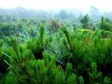 Dew Catcher by djrangman, Photography->Landscape gallery