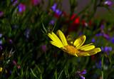 Bit Late by biffobear, photography->flowers gallery