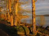 Bright Sunny Oaks by busybottle, Photography->Landscape gallery