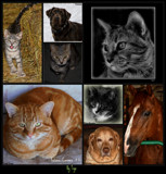 Felines, Canines + 1 by tigger3, photography->pets gallery