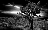 Desert Street Lights by snapshooter87, photography->manipulation gallery