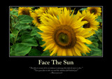 Sunflower Poster by LynEve, photography->flowers gallery