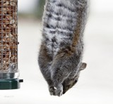 Antics At The Feeder by tigger3, photography->animals gallery