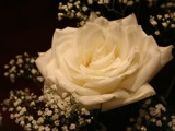 Another Rose by DrPepper89, Photography->Flowers gallery