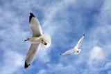 Flight of Inspiration 2 by BrandyAdams77, Photography->Birds gallery