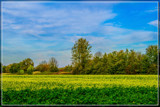 Layers In The Early Fall by corngrowth, photography->landscape gallery