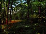 A walk in Thornley Wood by biffobear, photography->landscape gallery