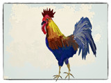 A Rooster Doodle Do by bfrank, illustrations gallery