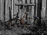 On Yer Bike ! by biffobear, photography->still life gallery