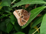 Butterflies Are Free To Fly by connodado, Photography->Butterflies gallery