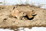 Barking Trio by Nikoneer, photography->animals gallery