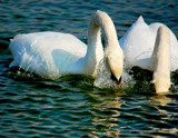 Splish-Splash!! #2 - Expanded!! by braces, Photography->Birds gallery