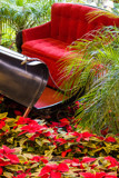 Parked Sleigh by Pistos, photography->flowers gallery