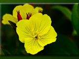 Free As Well by phasmid, Photography->Flowers gallery