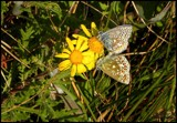 Butterfly Heaven by Dunstickin, photography->butterflies gallery