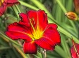 Oriental Lily by LynEve, photography->flowers gallery