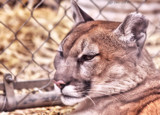 Exotic Feline Rescue Center #1 by tigger3, photography->animals gallery