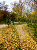 Autumn Landscape -2- by ventiol, photography->landscape gallery