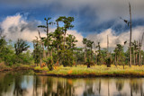 Jurassic Swamp  2 by 100k_xle, Photography->Landscape gallery