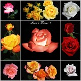 Roseman's Roses Collage - 1 by Roseman_Stan, photography->flowers gallery