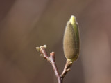 A Bud In The Sun by Jimbobedsel, photography->nature gallery