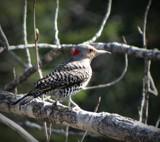 birds 3 by picardroe, photography->birds gallery