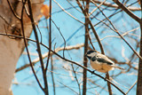 Another Little Bird Photo by Eubeen, photography->birds gallery