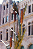 Cattails by kidder, Photography->Sculpture gallery