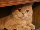 Posh and fat cat by OllgaL, photography->pets gallery