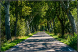 Shadowed Countryroad by corngrowth, photography->landscape gallery