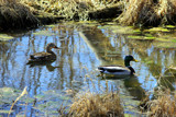 The place was a quiet backwater by Pistos, photography->birds gallery