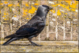 Are You Talking To Me? by corngrowth, photography->birds gallery