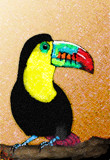 Amazing Toucan by bfrank, illustrations gallery