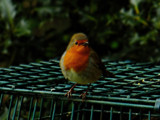 Softly Softly by biffobear, photography->birds gallery