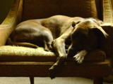 Regan by m_koempel, Photography->Animals gallery